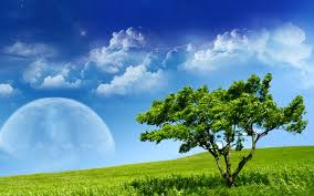 grass and sky backgrounds. Grass Sky Planet Mood Tree Desktop Backgrounds Nature Windows 7 And