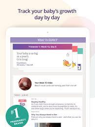 Day By Day Pregnancy Tracker Major Magdalene Project Org