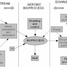 Bioprocess Flow Chart Characteristic Flow Chart For Biotechnology Centred On