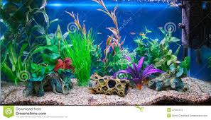 Fish Tank Fish Tank 32 Surprising Pet Fish Tank Photo Design Pet Fish Tanks