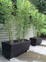 Small Picture Best 25 Phyllostachys nigra ideas on Pinterest Bamboo garden