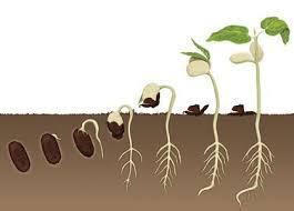 tohum ile ilgili görsel sonucu