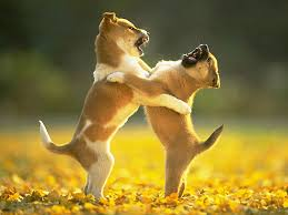 Image result for puppies play fighting