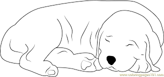 Small Picture Sleeping Dog Coloring Page Free Dog Coloring Pages
