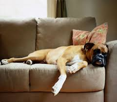 pets furniture. Protect Furniture From Pet Damage Pets