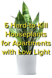 good houseplants for low light marvelous best houseplants images on gardens for apartments indoor plants low good houseplants for low light