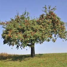 19 Best Apple Tree Varieties With A Guide To Flowering