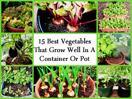 15 best vegetables that grow well in a container or pot jpg