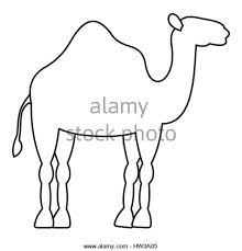 Small Picture Dromedary Camel Black and White Stock Photos Images Alamy