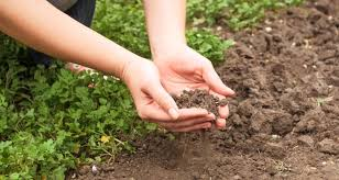 7 gardening mistakes you might be