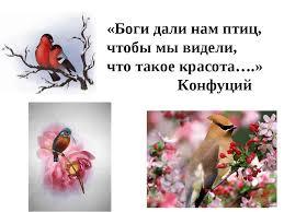 Презентация Зимующие птицы нашего края класс скачать бесплатно  Боги дали нам птиц чтобы мы видели что такое красота