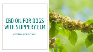 Cbd Oil For Dogs With Slippery Elm Pet Cbd Community