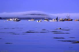 Bar Island Bar Harbor Acadia National Park