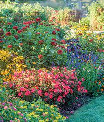 how to grow a flower garden flower