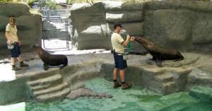 zookeeper cleaning. Contemporary Zookeeper Zookeeper Career In Cleaning Z