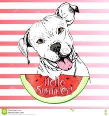 Vector иллюстрация нарисованная рукой английской собаки Pitbull есть