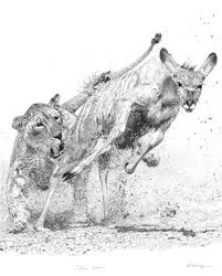 lioness hunting drawing.  Drawing Dynamic Realism  Original Pencil Drawing Of Fierce Pursuit Lioness Hunting Inside Lioness Hunting Drawing Pinterest