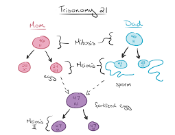 what is down syndrome article khan academy diagram of genetic transmission of trisomy 21