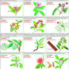 Medicinal Plants Chart Medicinal Plants Chart Manufacturer