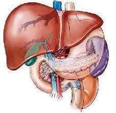 الفيروسات الكبدية وأهمية التغذية تحسين