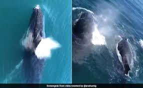 viral video claims to show whales at