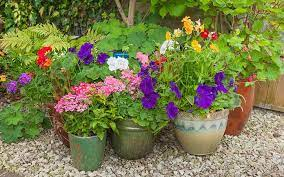 Protect from frost in winter. Container Gardening How To Grow Flowers In Pots Today S Homeowner
