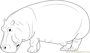 Hippo Realistic Coloring Pages Print Coloring