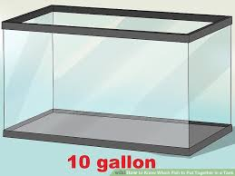 3 Ways To Know Which Fish To Put Together In A Tank Wikihow