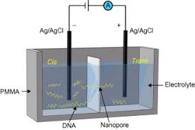 Nanopore Based Fourth Generation Dna Sequencing Technology