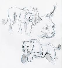 Sketches Animal Animal Sketches Google Search Why Can I Not Do This It Looks So