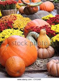 outdoor decor nostalgic pumpkins squash gourds holiday decoration with pumpkins and flowers stock image