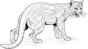 Ocelot Dwarf Leopard Coloring Page Free Printable Coloring Pages