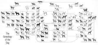Dog Genealogy Chart Image Result For Breeds Of Dogs Ancestry Chart Dog Breeds