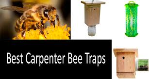 best carpenter bee traps photo