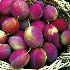 Professor Mixes Botany Art To Create U0027Tree Of 40 Fruitsu0027  CTV NewsPlum Fruit Tree Varieties