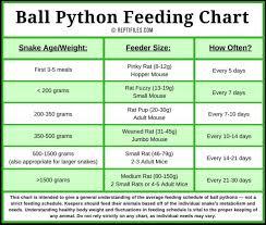 Ball Python Feeding Tips Reptifiles Ball Python Care
