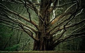 Αποτέλεσμα εικόνας για δέντρα