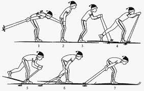 одношажный ход методика обучения  Одновременный одношажный ход методика обучения