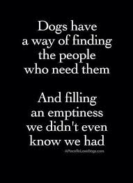 Rescue Dog Quotes Cool My Junior Pit Bull Rescue Pinterest Dog Animal And Doggies