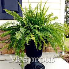 Recent Posts Of Home Design Page 5  Home DesignDecorative Plants For Home