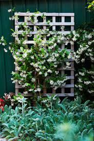 Gardening Australia  How To Subtropical Shade PlantsClimbing Plant For Shade