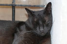 Nullpunkt Wenn Man Für Die Katze Ein Neues Zuhause Finden Muss