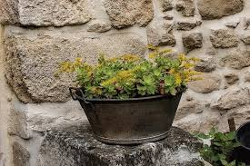 garden decor potted plant greenery