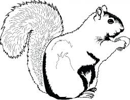 S Is For Squirrel Coloring Page Scaredy Pages Printable Gray The