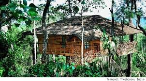 luxurious tree house hotel. Tree House Tranquil Luxurious Hotel D