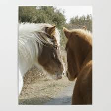 Cheap Horse Posters Horse Conversations Poster By Bravuramedia