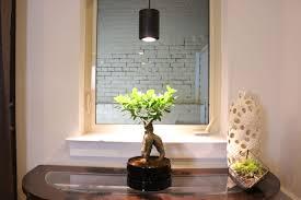Growing Bonsai Under Led Lights Aspect Highland Grow Light Photo Gallery Painting Lamp