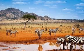 """Résultat de recherche d'images pour """"image kenya"""""""