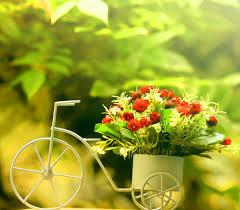 flower: Whatsapp Dp Flower Images Download