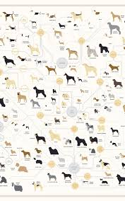 All Dog Breeds Chart 181 Breeds Of Dog On One Awesome Poster Dog Breeds Dog